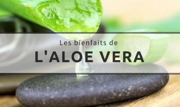 L'aloe vera | Quels sont les bienfaits ?
